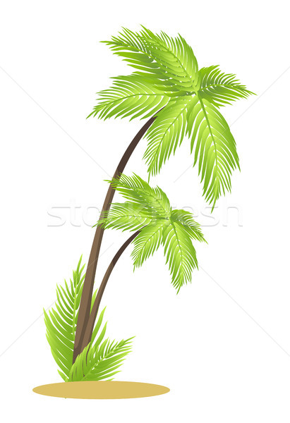 Alto tropicales palmeras pequeño pieza arena Foto stock © robuart