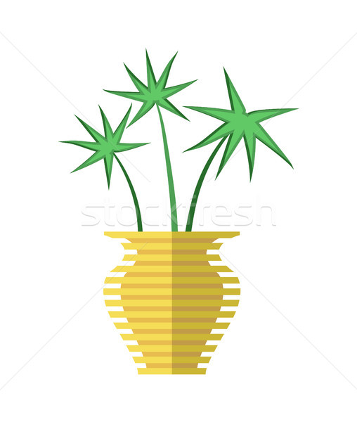 Cyperus Papyrus in Yellow Vase Vector Illustration Stock photo © robuart