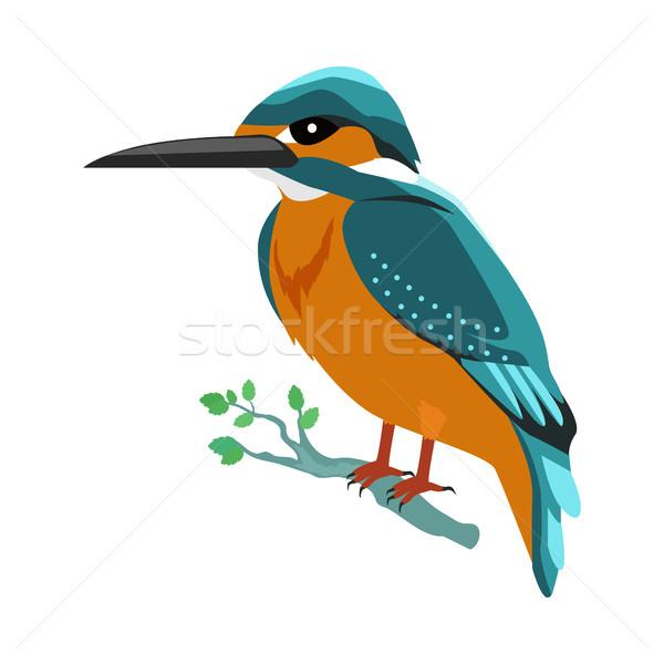 Kingfisher Flat Design Vector Illustration Stock photo © robuart