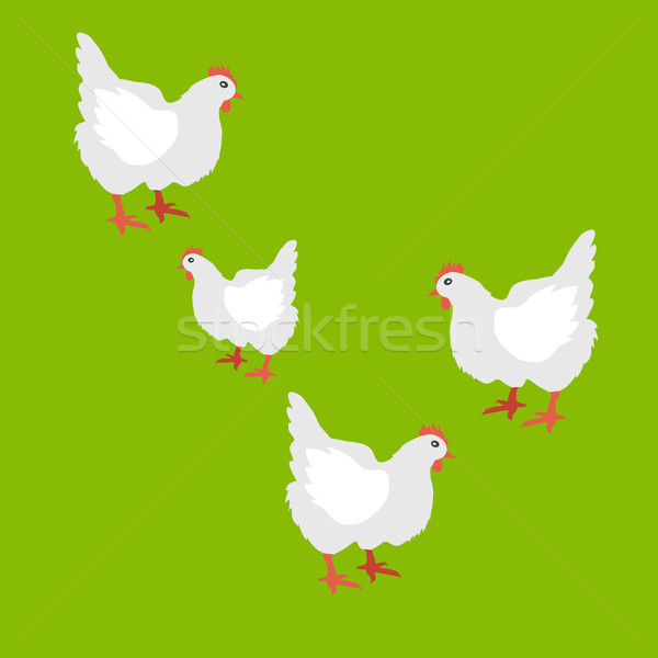 Collection of Hen Vector Illustration Isolated Stock photo © robuart