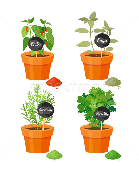 Chile and Sage Potted Plants Vector Illustration Stock photo © robuart