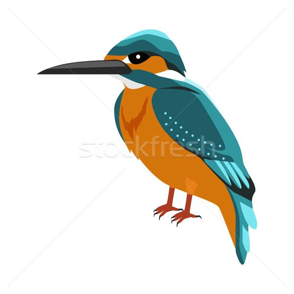 Сток-фото: зимородок · дизайна · вектора · птиц · живая · природа · стиль