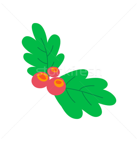 Leaves Berries Colorful Image Vector Illustration Stock photo © robuart