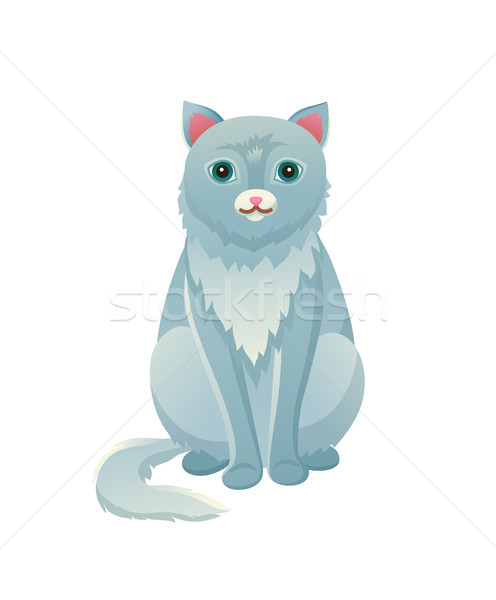 Cat Sitting Calmly Domestic Pet Vector Illustration Stock photo © robuart