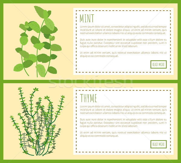 Mint and Thyme Condiments, Vector Illustration Stock photo © robuart