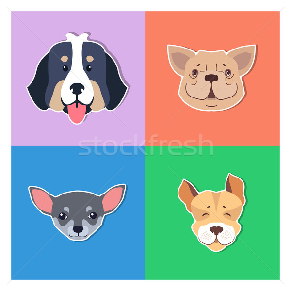 Four Canine Heads of Pedigreed Dogs Doggie Concept Stock photo © robuart