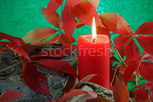 Sonbahar mum kırmızı yanan Virjinya yaprakları Stok fotoğraf © rogerashford