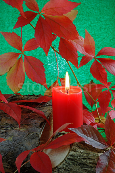 Automne bougie rouge brûlant Virginie laisse Photo stock © rogerashford