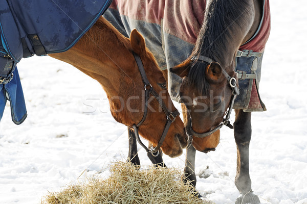 Stock photo: Horses Whispering
