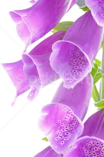élevé clé fleurs fleur eau Photo stock © rogerashford