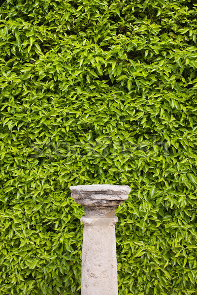 Column Pedestal and Living Wall Stock photo © rognar