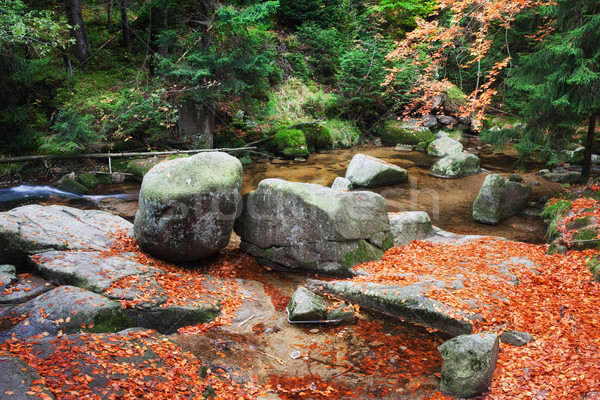 Fallen Leaves at Creek in Autumn Forest Stock photo © rognar
