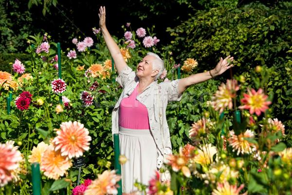 Szczęśliwy starszy pani ogród kobieta Zdjęcia stock © rognar