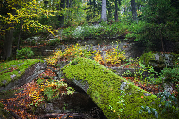 Ancient Forest Wilderness in Autumn Stock photo © rognar