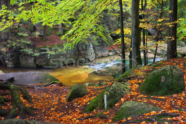 Stream in Autumn Forest in Poland Stock photo © rognar