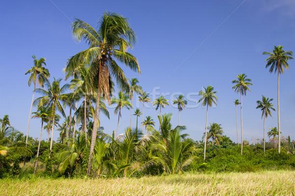 Bomen bosje landelijk Thailand hemel Stockfoto © rognar