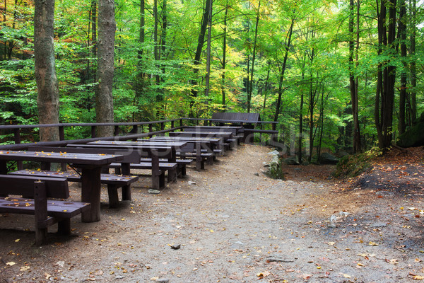 Picnic and Rest Tables and Benches in Forest Stock photo © rognar