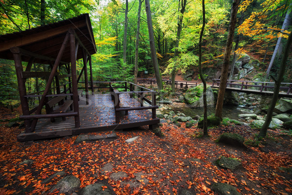 Shelter by the Stream in Autumn Forest Stock photo © rognar
