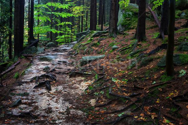 Yol dağ orman kapalı ağaç Stok fotoğraf © rognar