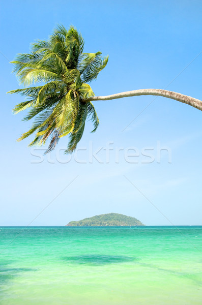 Tropical Landscape Stock photo © rognar