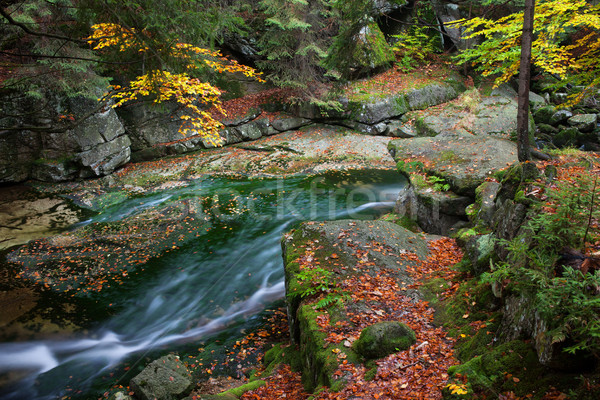 Small Creek in the Mountain Forest Stock photo © rognar