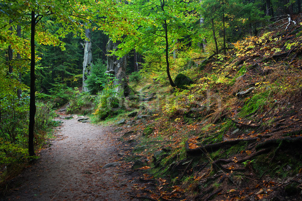 Path in Mountain Forest Stock photo © rognar