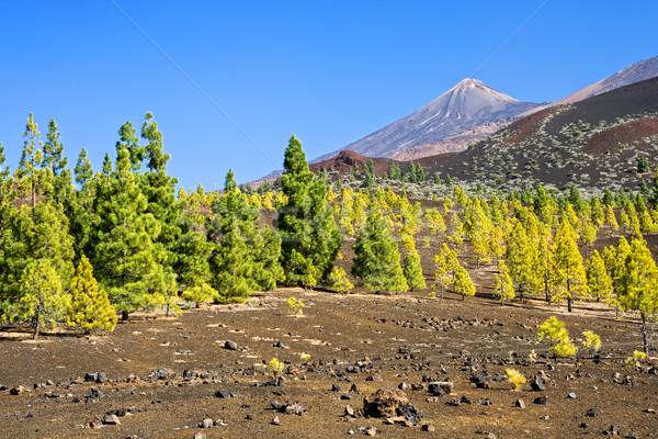 Tenerife manzara park volkanik İspanya Stok fotoğraf © rognar