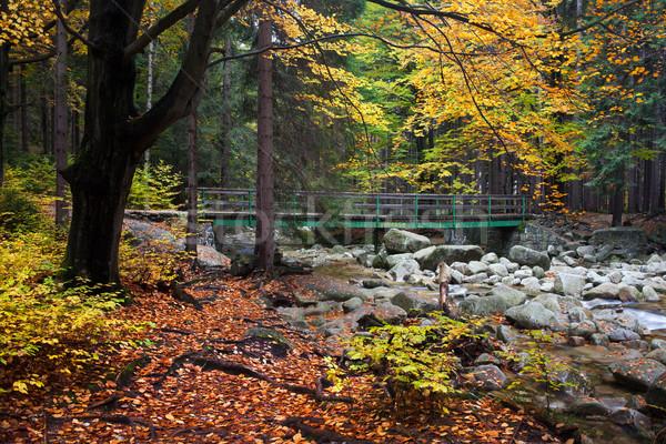 Outono floresta cenário córrego ponte gigante Foto stock © rognar