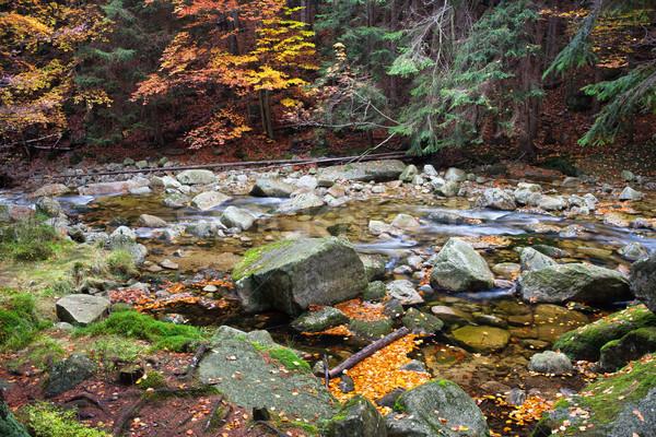 Stream najaar berg bos tsjechisch republiek Stockfoto © rognar