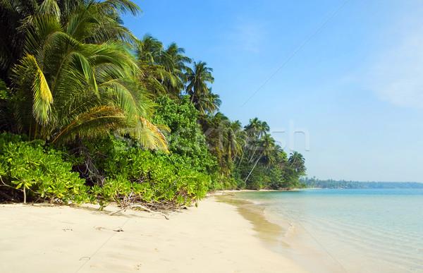 Tropical Island Shore Stock photo © rognar