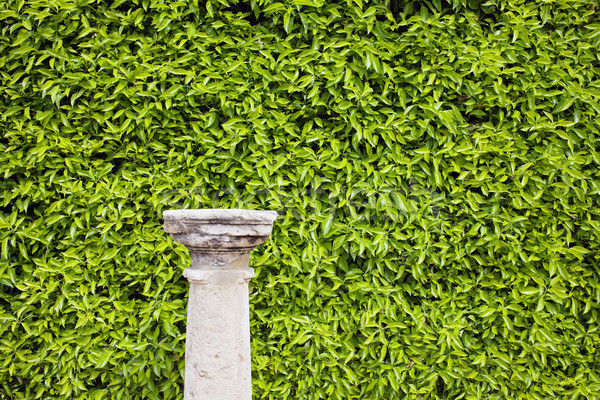 Hedge Background and Column Pedestal Stock photo © rognar