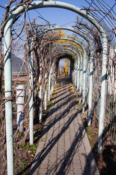 Path in a Garden Stock photo © rognar