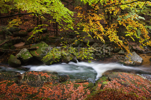 Creek in Autumn Forest Stock photo © rognar