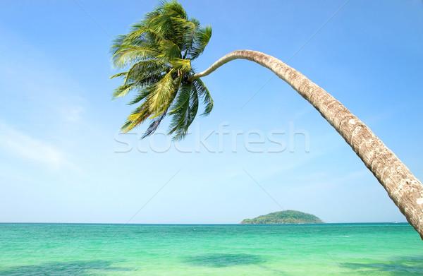 тропические пейзаж пальма океана Таиланд Сток-фото © rognar