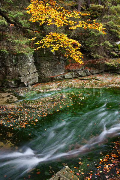 Dere sonbahar manzara sakin su orman Stok fotoğraf © rognar