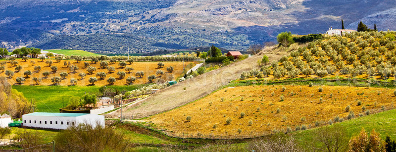Andalusia Countryside Panorama Stock photo © rognar