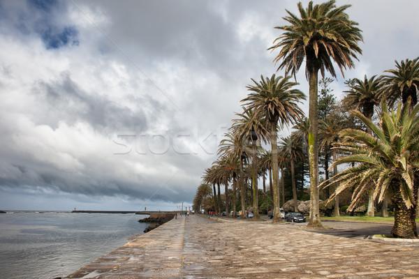 Promenade rivier wijk palmbomen mond wolken Stockfoto © rognar