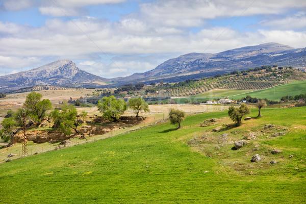 風景 スペイン 木 緑 草原 丘 ストックフォト © rognar