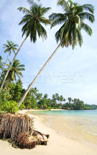 Тропический остров удаленных пляж берега кокосового Сток-фото © rognar