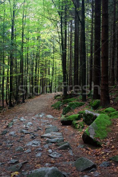 Footpath in Mountan Forest Stock photo © rognar