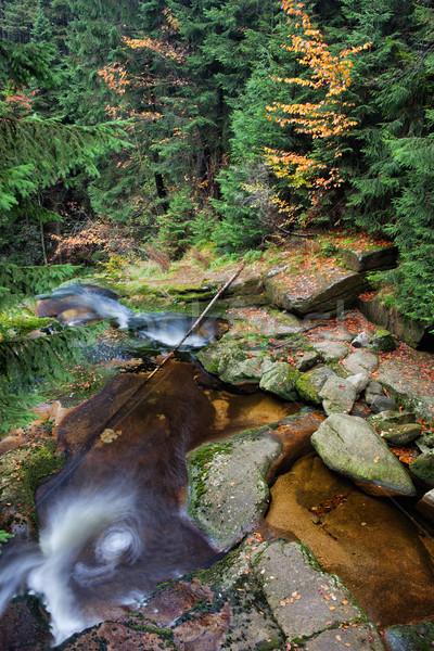 Stream najaar berg bos bergen park Stockfoto © rognar