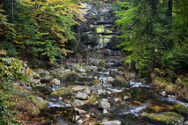 Stream montagna autunno foresta parco natura Foto d'archivio © rognar