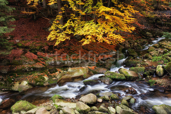 Foto stock: Córrego · montanha · floresta · outono · cenário · montanhas