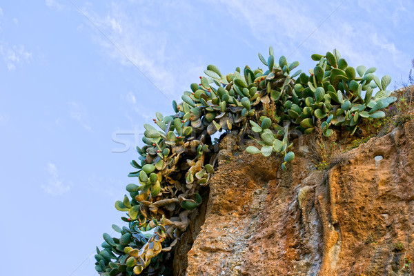 Kaktus Urwisko rozwój krawędź charakter rock Zdjęcia stock © rognar