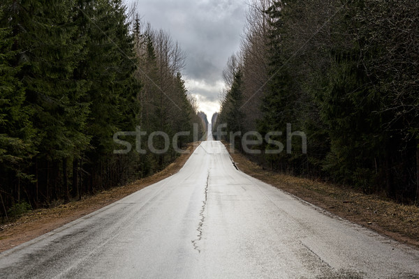 森林 道路 金属 木 ストックフォト © Roka