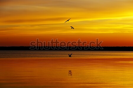 オレンジ 日没 湖 風景 レジャー リゾート ストックフォト © Roka