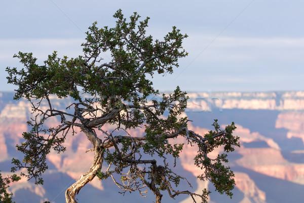 Grand Canyon park reggel tájkép fa tavasz Stock fotó © Roka