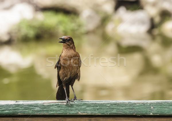 Birds Stock photo © Roka