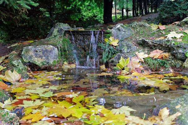 Vallen bladeren cool stream Stockfoto © Roka
