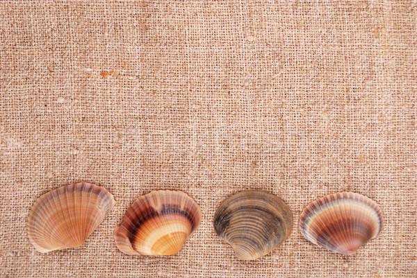 ракушки старые текстильной морской темы Сток-фото © Romas_ph